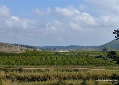 Orange plantation in the Asseca valley